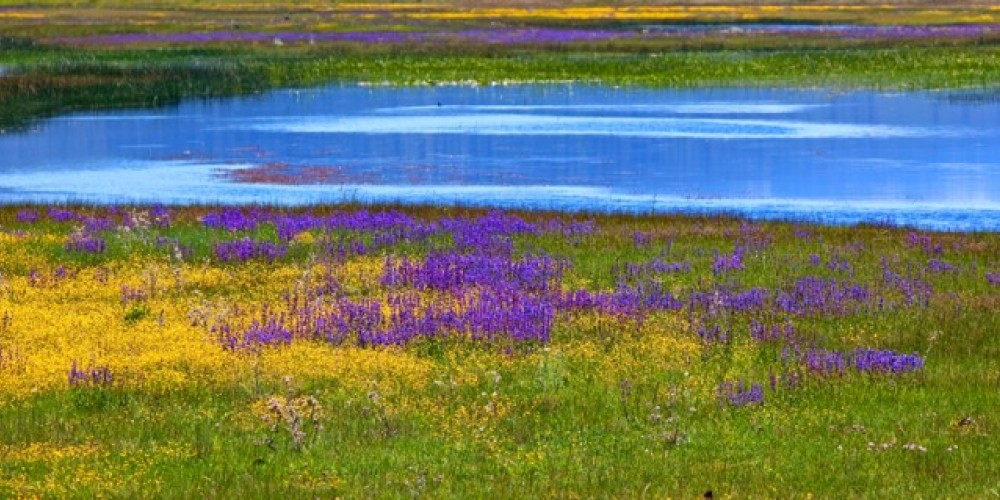 Wildflowers are as plenty as birds and wildlife – Darby Hayes
