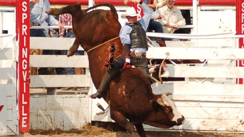 Bull Riding – Zimmerman