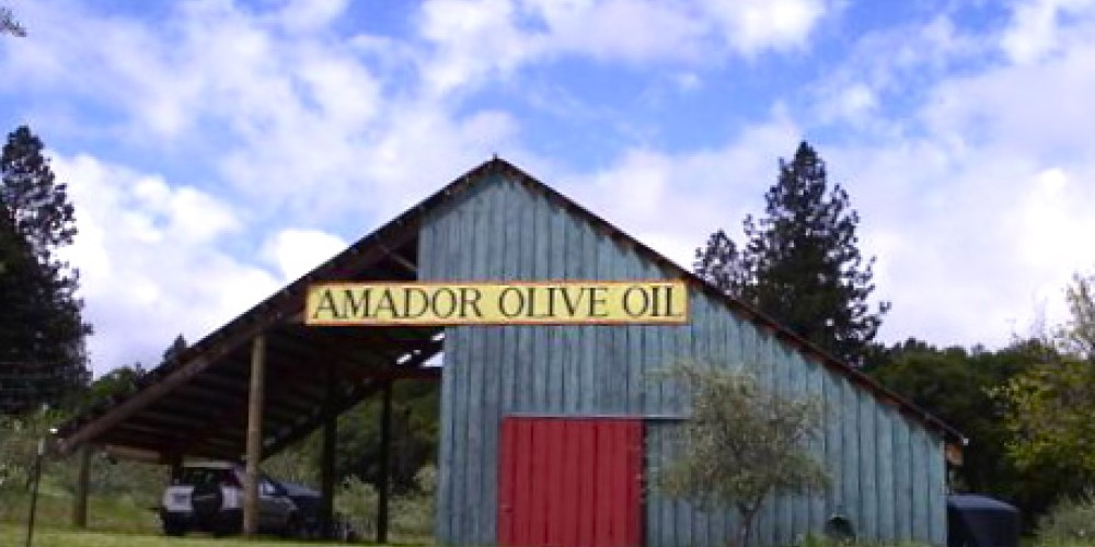 This is the headquarters for Susan Bradstad's operations. An Amador City local, she manages the groves, harvests at the perfect time, oversees the processing and insures that the taste is perfect. – Susan Bragstad