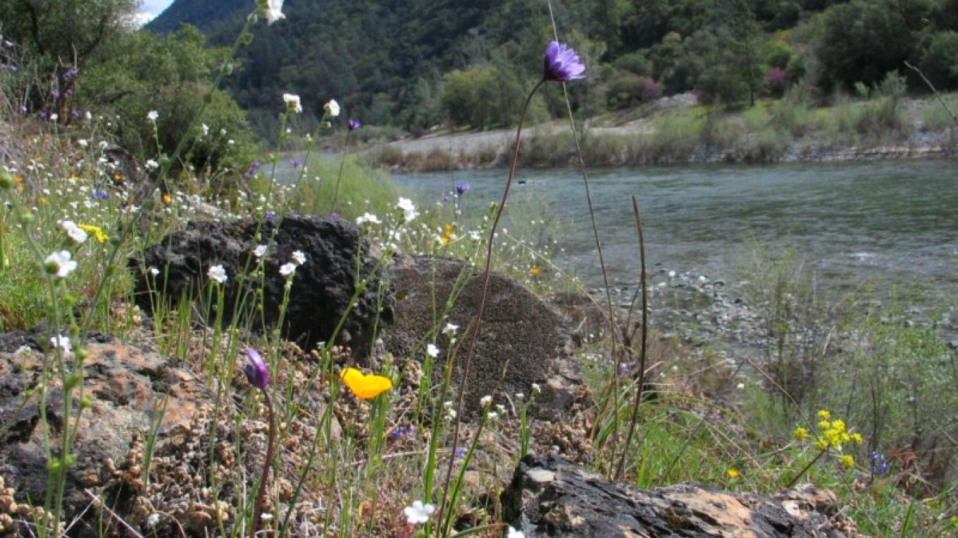 Wildflowers on the river. – Placer Land Trust staff