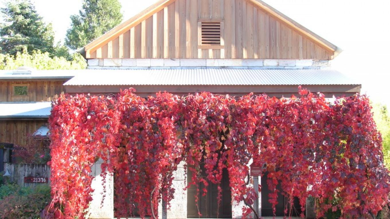The front of our building covered with flaming Virgina Creeper in the fall. – Adam Gottstein