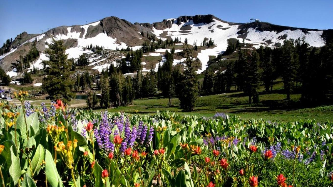 Wildflowers bloom along the hiking trails on the upper mountain. – Tom O'Neill