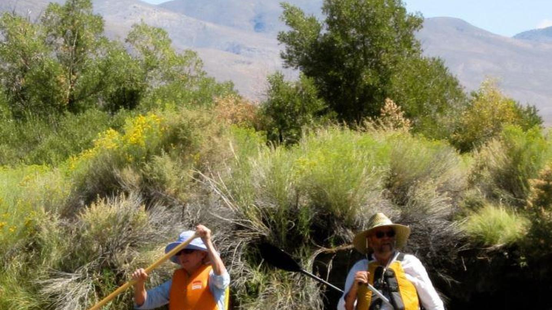 Owens River birding – http://esaudubon.org