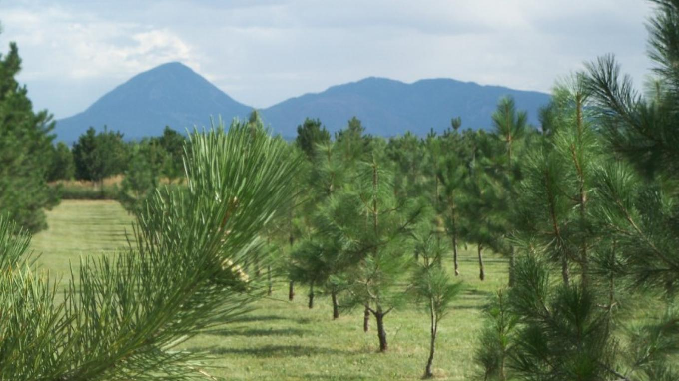 View of Sleeping Ute Mountain looking south from the Cabin. – K. Chaffin
