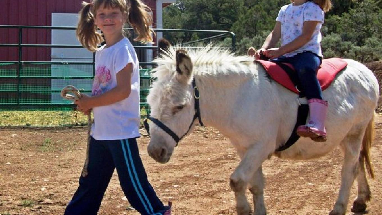 Riding Mini Donkeys At ASStec Acres – ASStec Acres