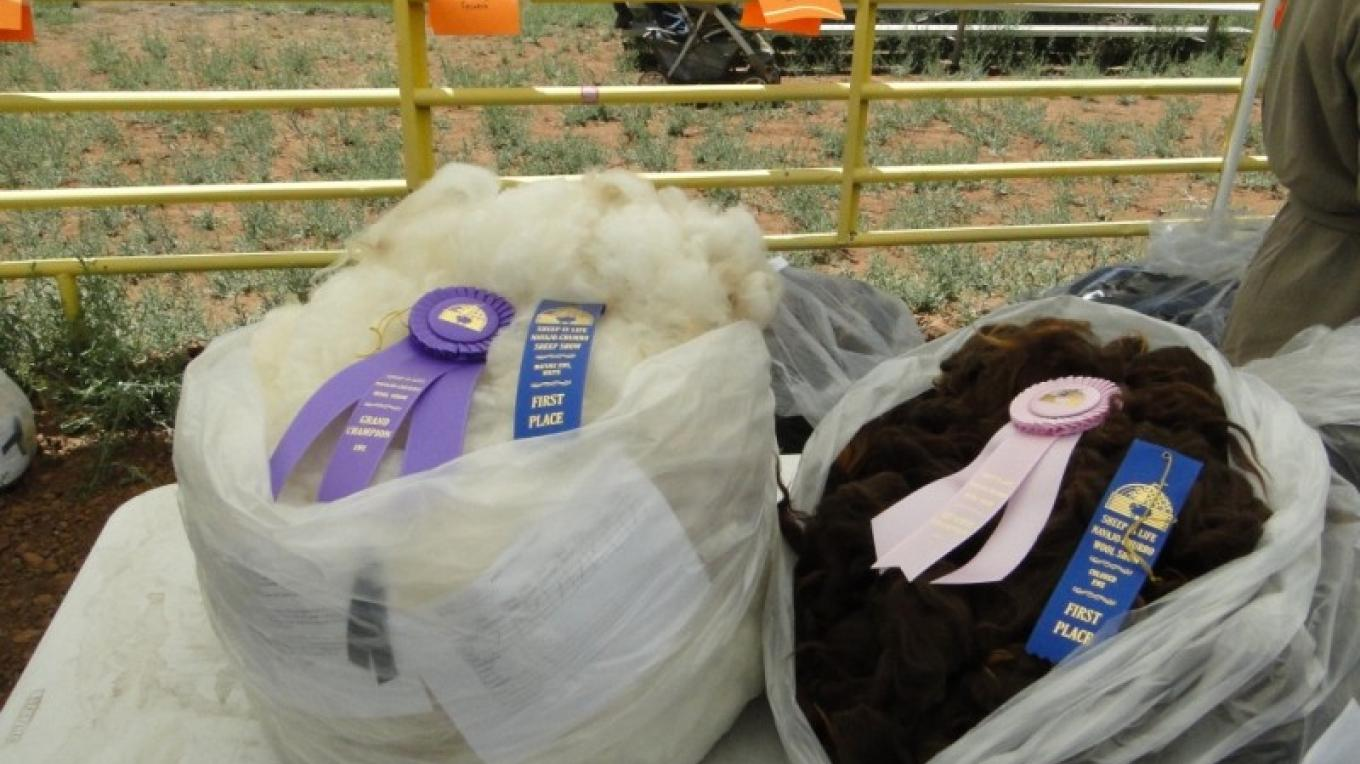Champion Navajo Churro wool fleeces. – Cindy Dvergsten