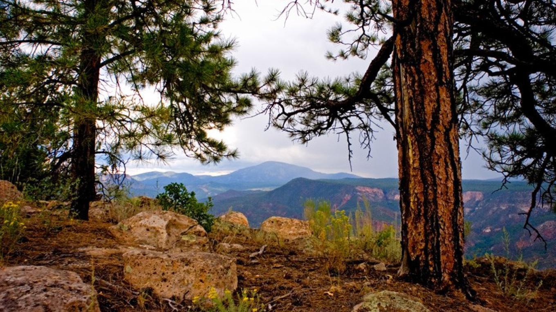 Jemez Mountains – Theodore Greer