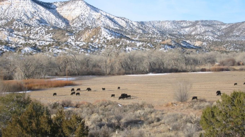 Alfalfa field in winter – Glenna Dean