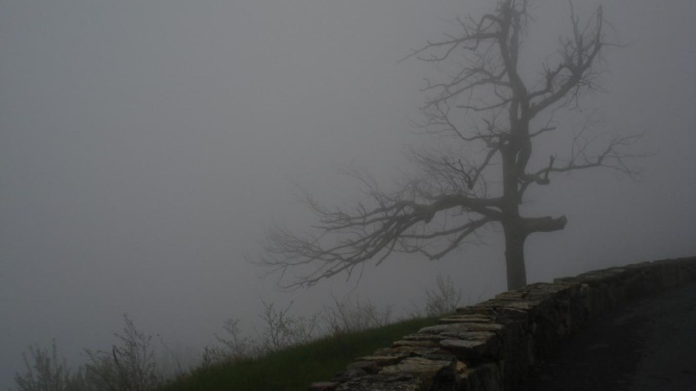 Tree in the Mists – Lynne Burton