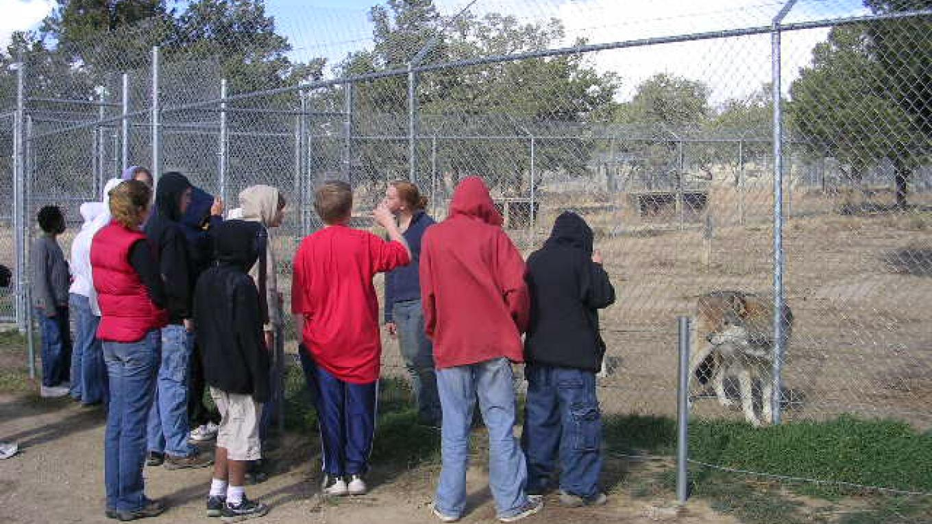 Guided tour at Wild Spirit Wolf Sanctuary – sandhillcenter.org