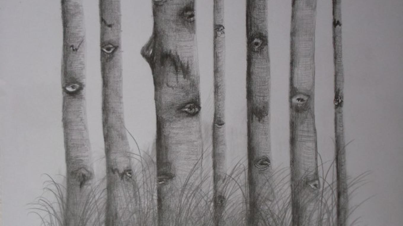 """Aspens""   8"" x 10"" Pencil   print   framed $75.00 – Lynne Burton"
