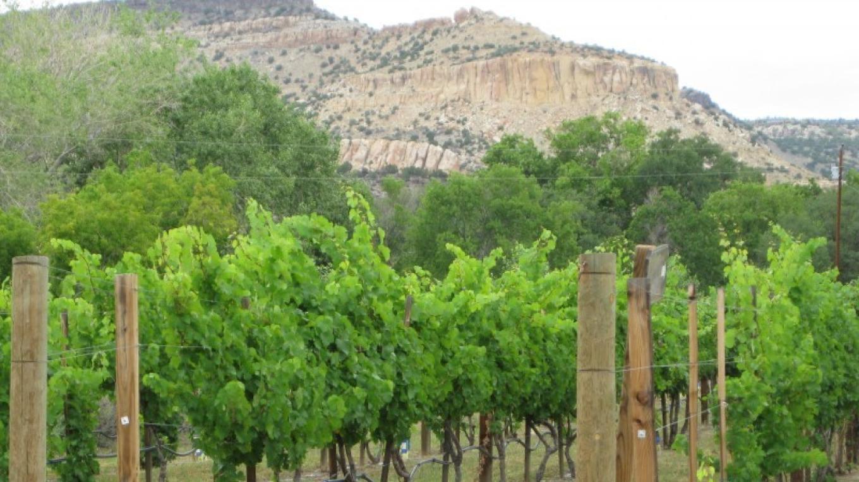Riesling Vineyards – Antonio Trujillo