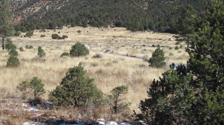 View east across Bonita Canyon to FR 447 and alternate loop trailhead. – SO