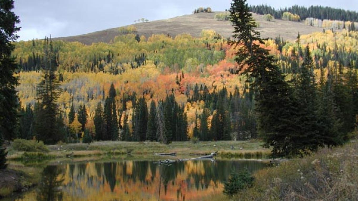 Along Harts Draw Road – US Forest Service