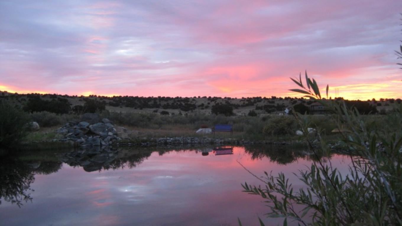 Guadalupe Vineyard Pond – Antonio Trujillo