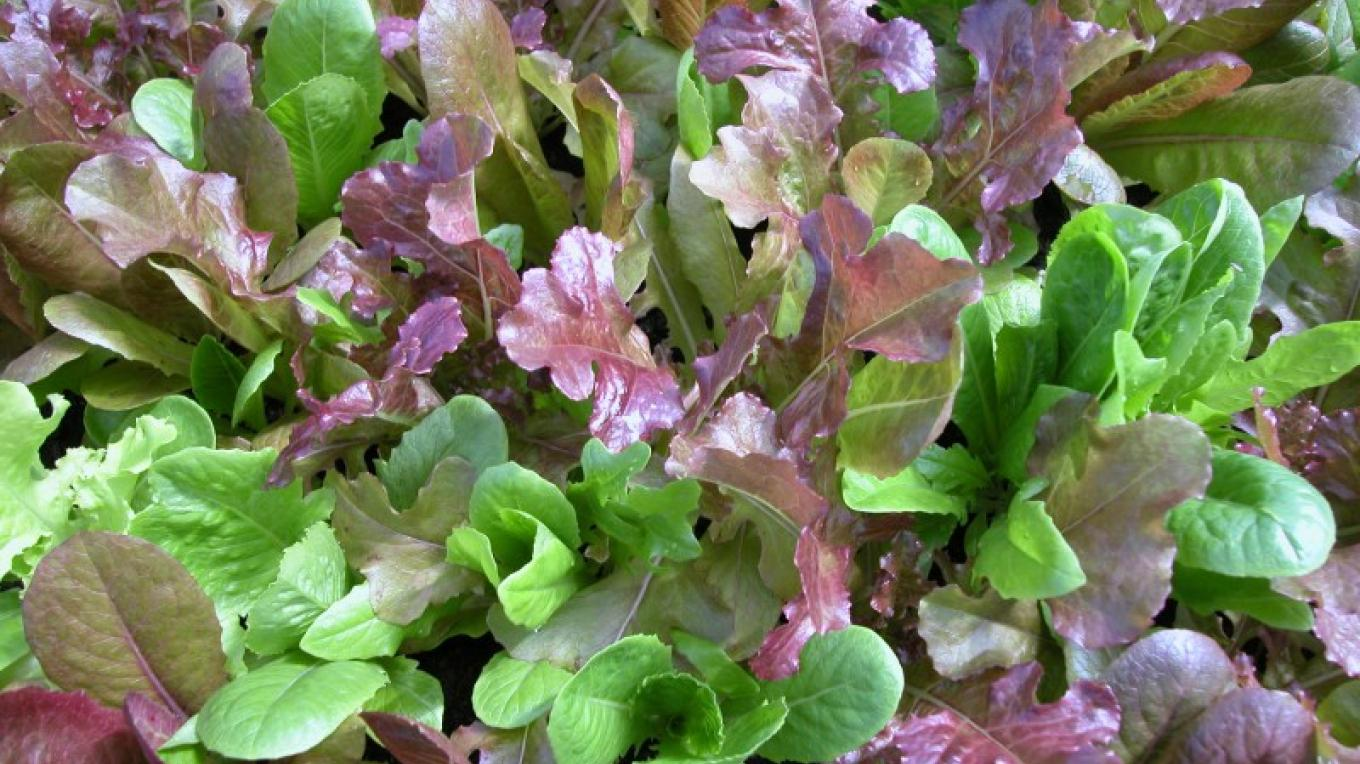 Greenhouse microgreens – Kyle Grote