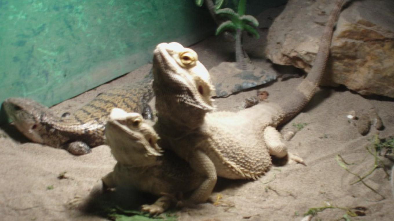Rescued Lizards – Erin Young