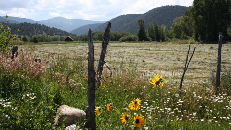 Jicarita Mountain in Late Summer – Johanna DeBiase