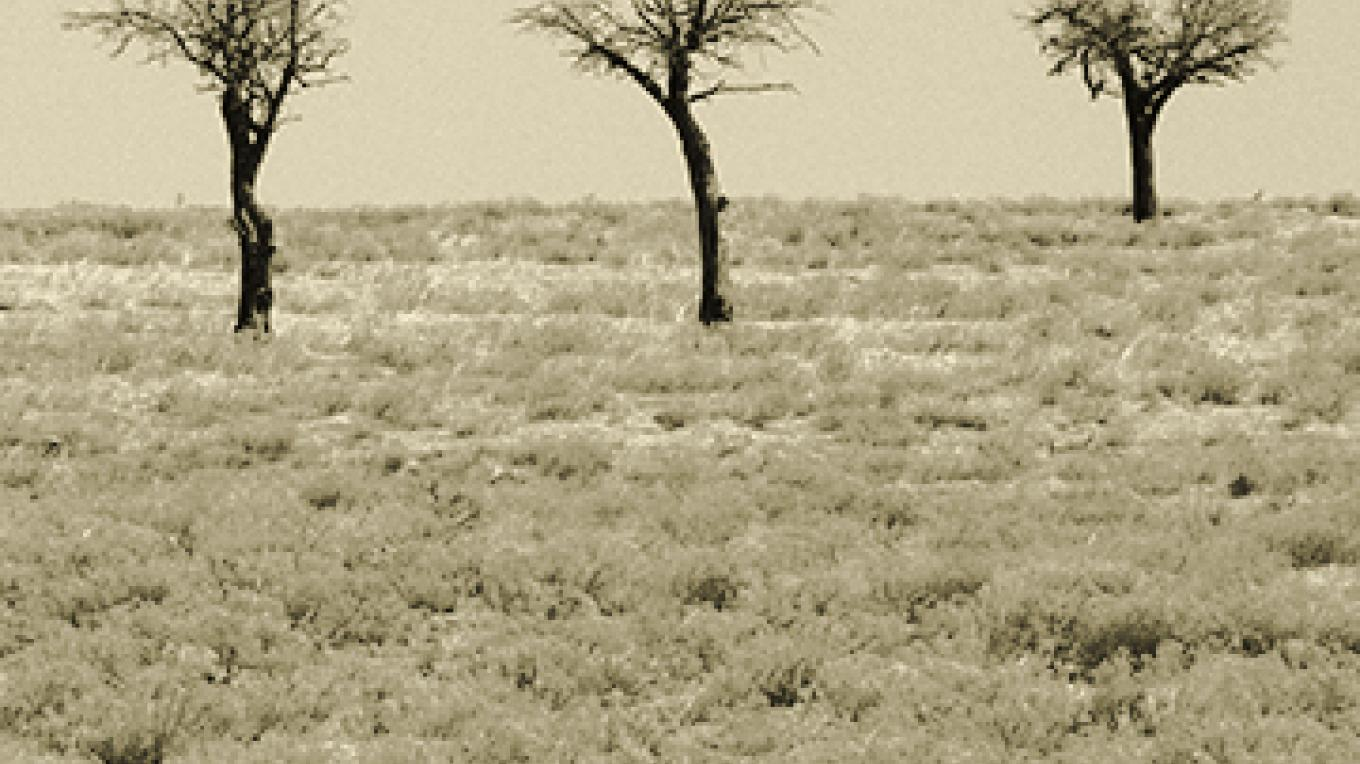 """Three Trees near Clayton, NM"" – Kathleen Brennan"