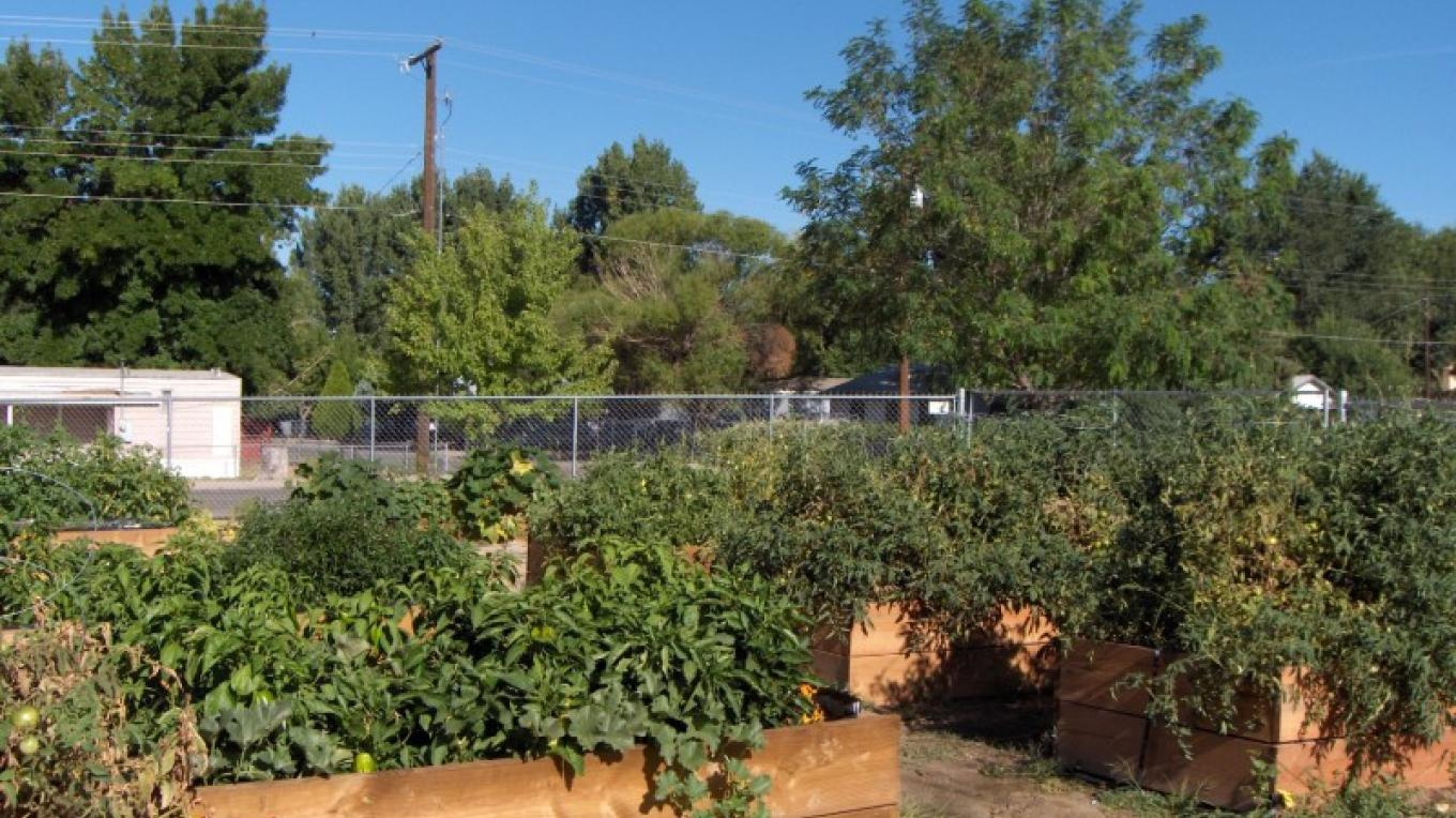 Bloofmield Senior Citizen's Center Community Garden – Jessica Polatty