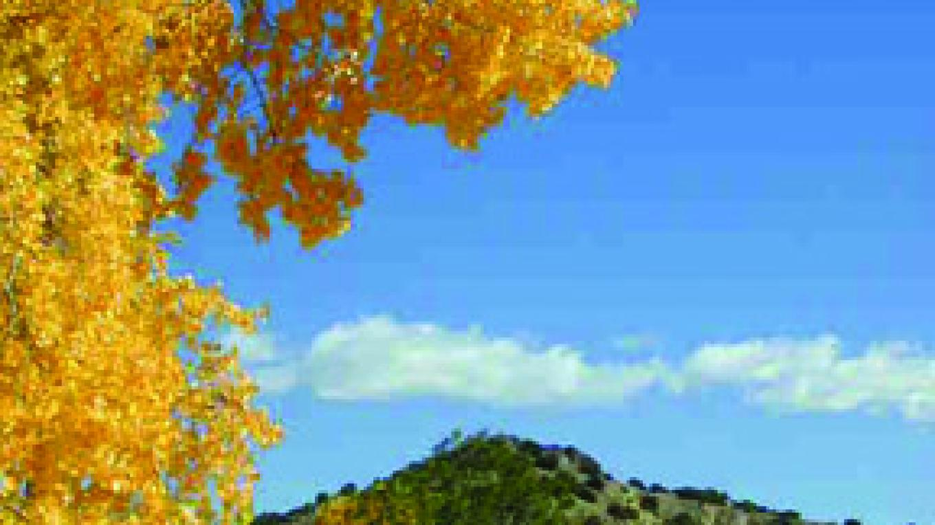 Fall cottonwoods at the arroyo – Ken Kuhne