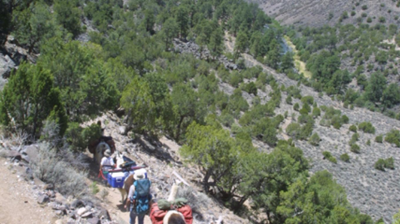 "The Rio Grande Gorge: New Mexico's ""Grand Canyon"" – Wild Earth"