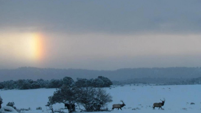 Snowy winter morning – Melody Perez