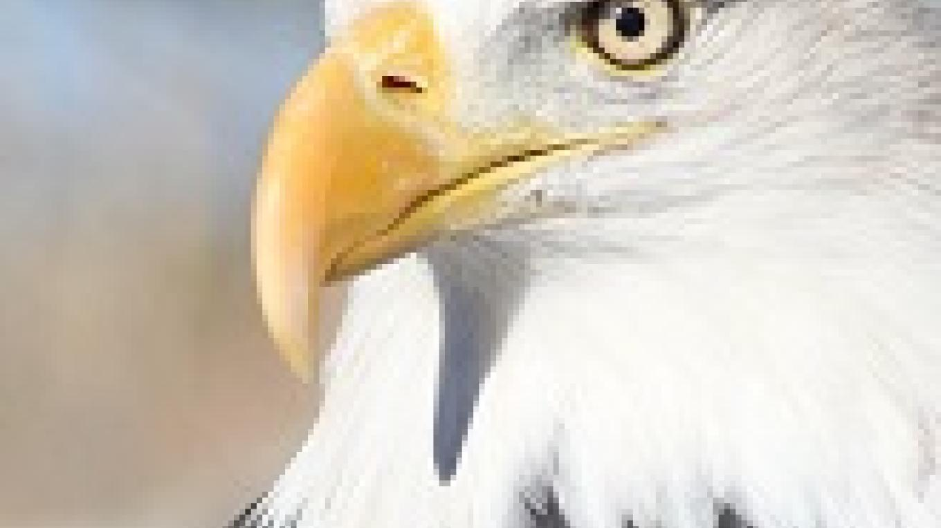 Come see native wildlife like the Bald Eagle and many others!