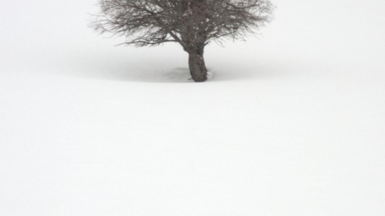 Tree in Whiteout – © Richard Durnan