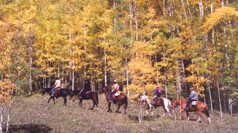 Fall Trail – Lynne Lewis