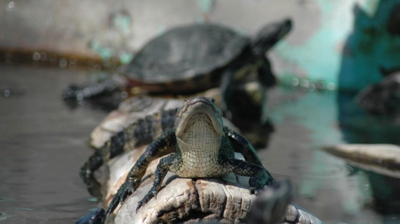 Rescued Turtles – Erin Young