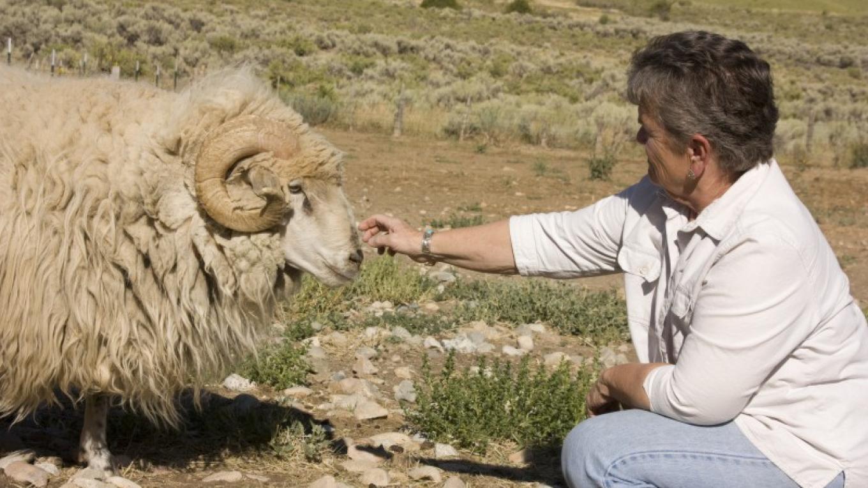 Navajo Churro Sheep – Barbara Grist