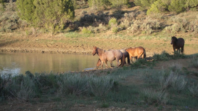 Wild Band at the Water Hole – Sandi Claypool