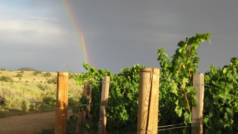 Vineyards – Antonio Trujillo