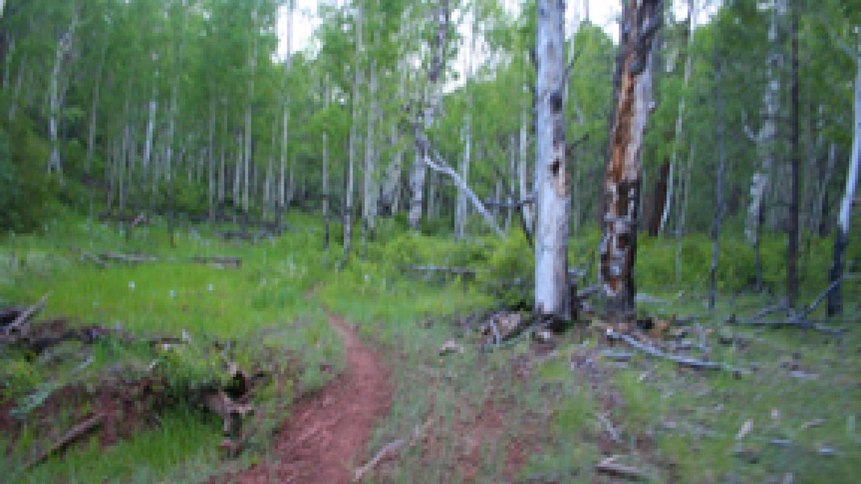 Quaking Aspen Trail – Chuck Van Drunen