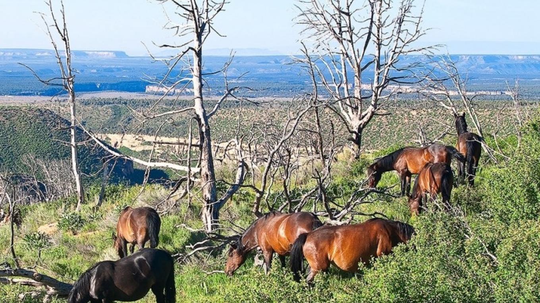 Feral horses in MVNP – Christopher Marona fpr ARAMARK