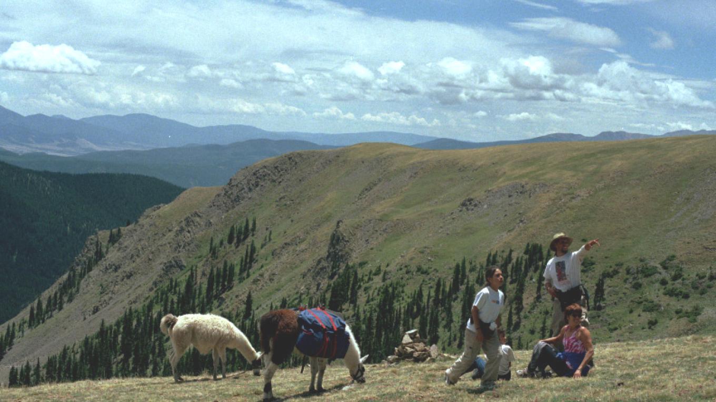Spotting elk on Latir Mesa (12,500') – Wild Earth