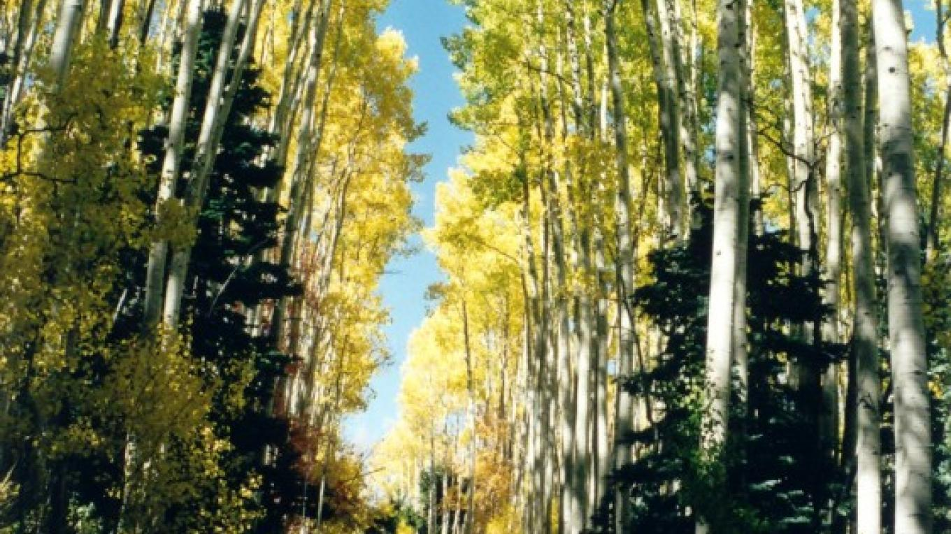 Fall along a side road from Harts Draw Road. – Dave Krouskop