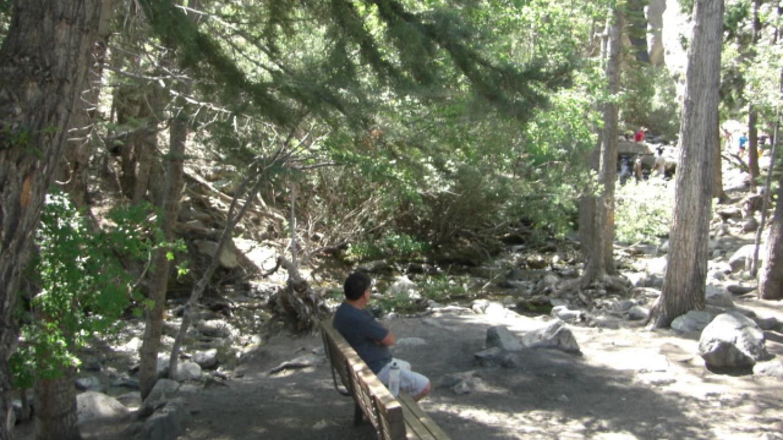 Grove of trees near Zapata Falls – Sharron Calvin