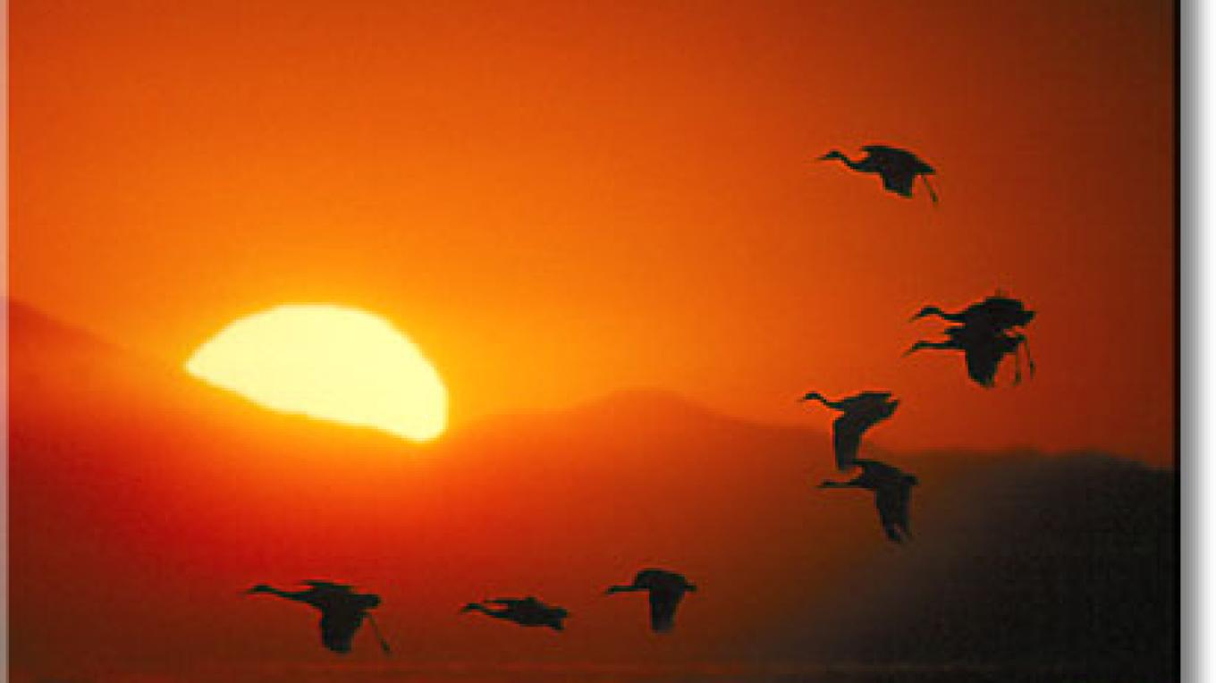 Cranes at sunset in the San Luis Valley – Ken Archer