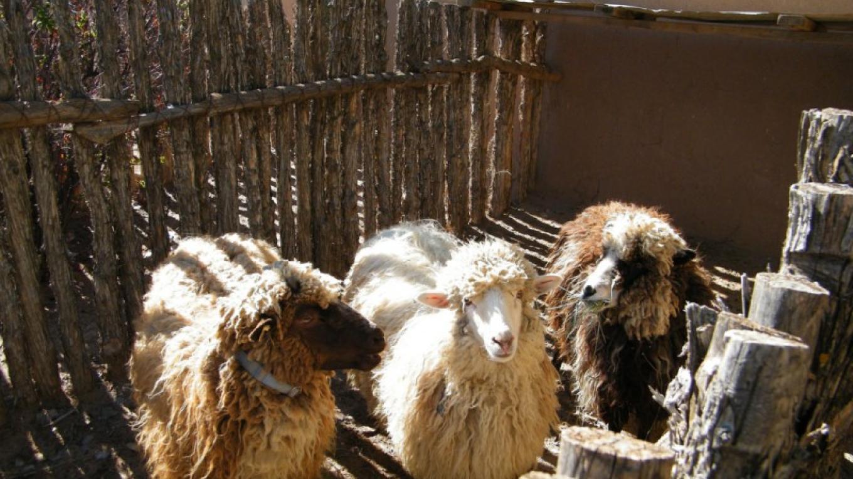 Animals at Casa San Ysidro – Heather Shore