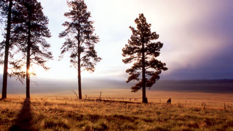 Morning fog in the Valle Grande – Don J. Usner