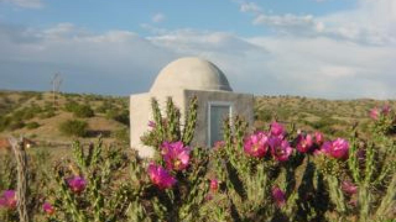 Cane Cholla in bloom at the Dome at Los Silvestres sometime in mid June each year. – Richard Bock