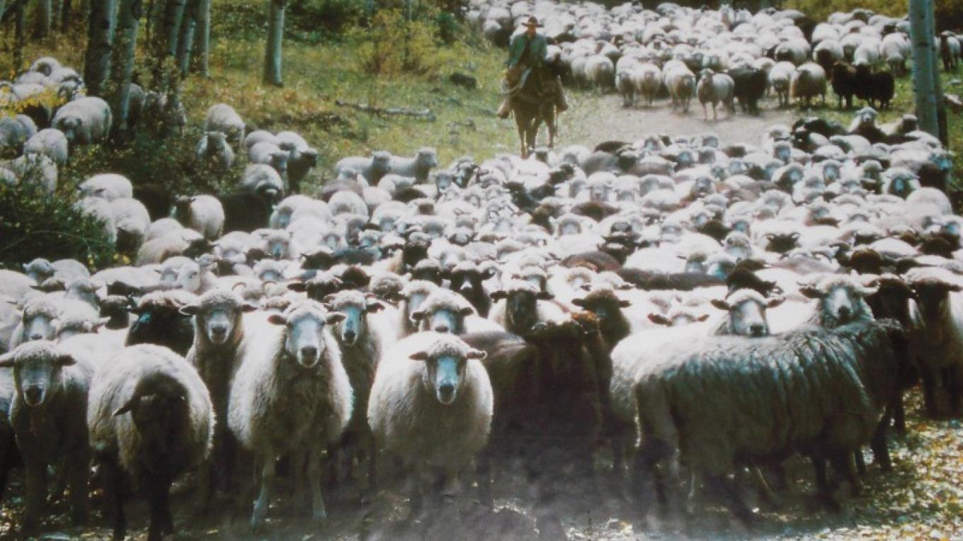 Tierra Wools is the home of Shepherd's Lamb products--frozen lamb, and churro fiber, yarn and pelts. – Alyce Elliott