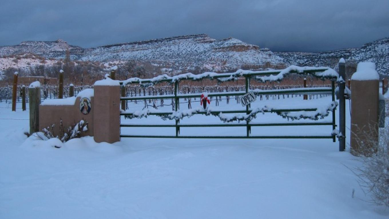 Vineyards at Christmas – Antonio Trujillo