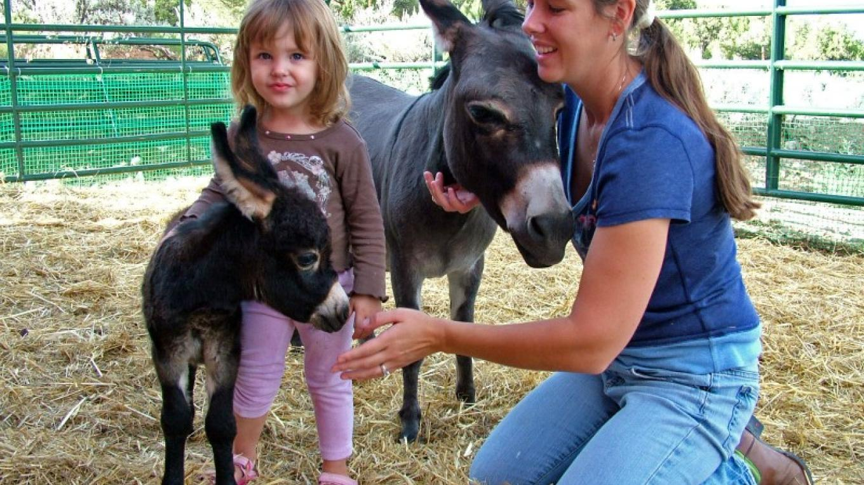 Babies Hugging Babies at ASStec Acres – ASStec Acres