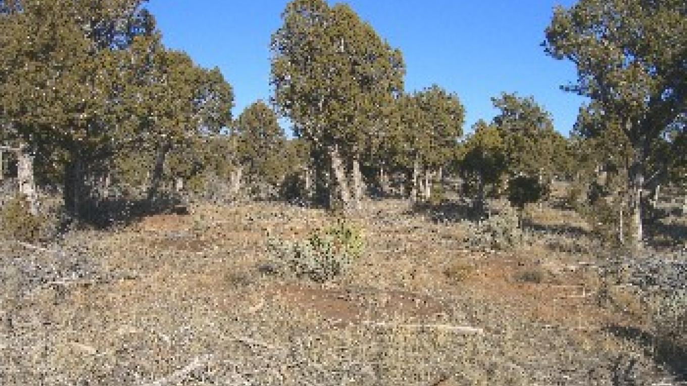 Piñon - Juniper forest – William