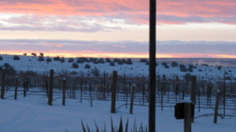 Vineyard Cross in Winter – Antonio Trujillo