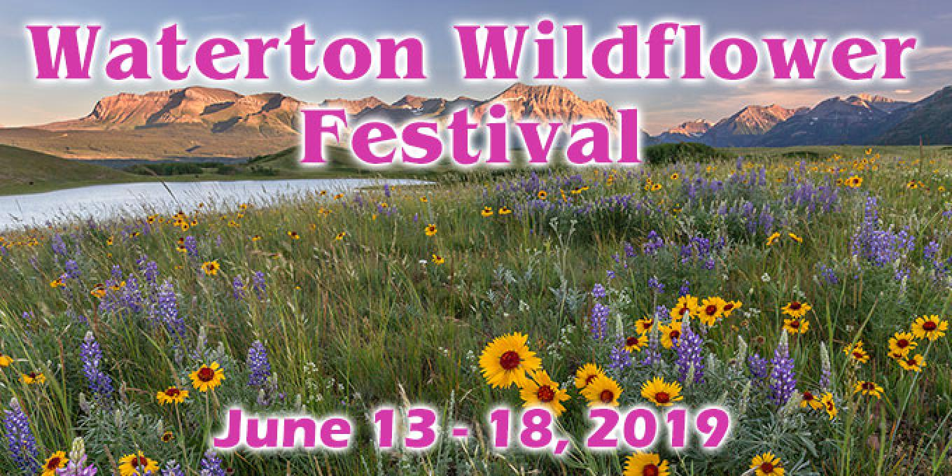 Picture shows the abundance of Wildflowers in Waterton. – Photo: Kyla Black