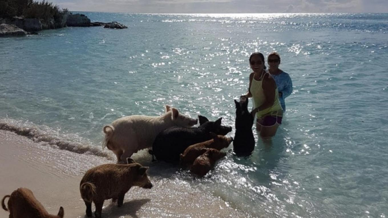 If you think that swimming with dolphins is cool, try swimming with pigs! – Mr. Roger & Zoe Cartwright